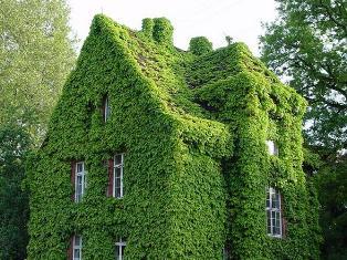 «Зелёный Дом»