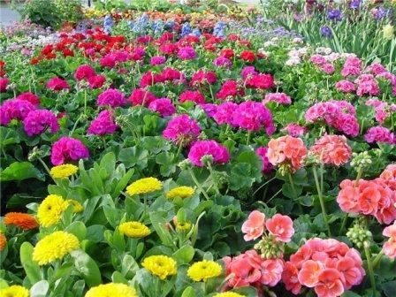 продажа цветов, садовых товаров, и доставка букетов